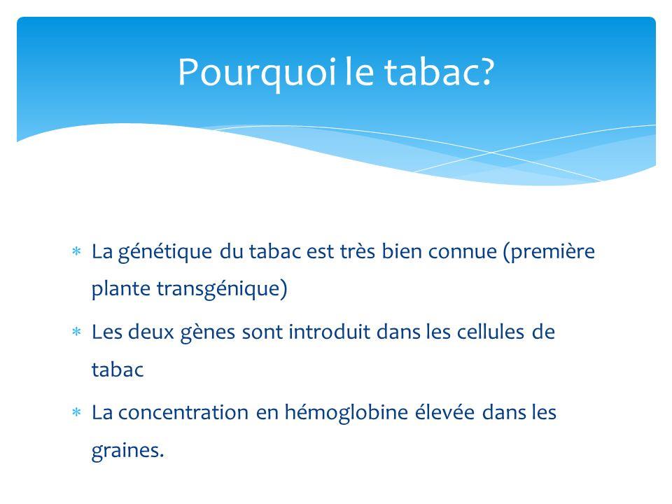 La génétique du tabac est très bien connue (première plante transgénique) Les deux gènes sont introduit dans les cellules de tabac La concentration en