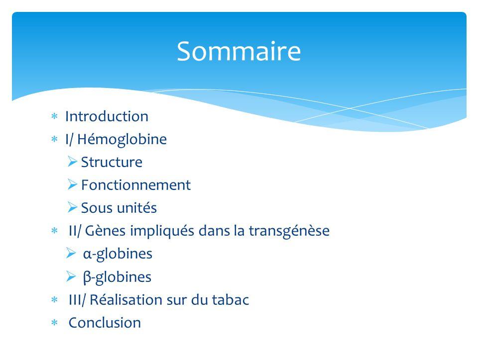 Introduction I/ Hémoglobine Structure Fonctionnement Sous unités II/ Gènes impliqués dans la transgénèse α-globines β-globines III/ Réalisation sur du
