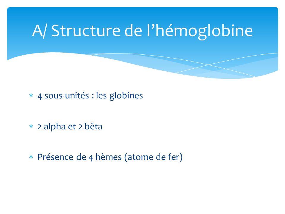 4 sous-unités : les globines 2 alpha et 2 bêta Présence de 4 hèmes (atome de fer) A/ Structure de lhémoglobine