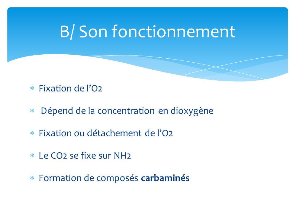 Fixation de lO2 Dépend de la concentration en dioxygène Fixation ou détachement de lO2 Le CO2 se fixe sur NH2 Formation de composés carbaminés B/ Son