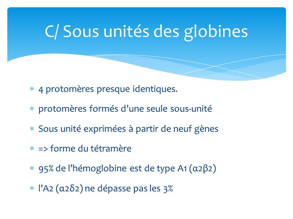 4 protomères presque identiques. protomères formés dune seule sous-unité Sous unité exprimées à partir de neuf gènes => forme du tétramère 95% de lhém