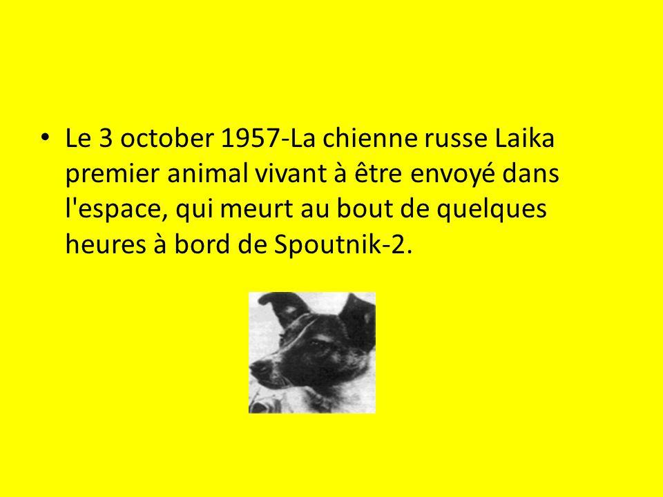 Le 3 october 1957-La chienne russe Laika premier animal vivant à être envoyé dans l'espace, qui meurt au bout de quelques heures à bord de Spoutnik-2.