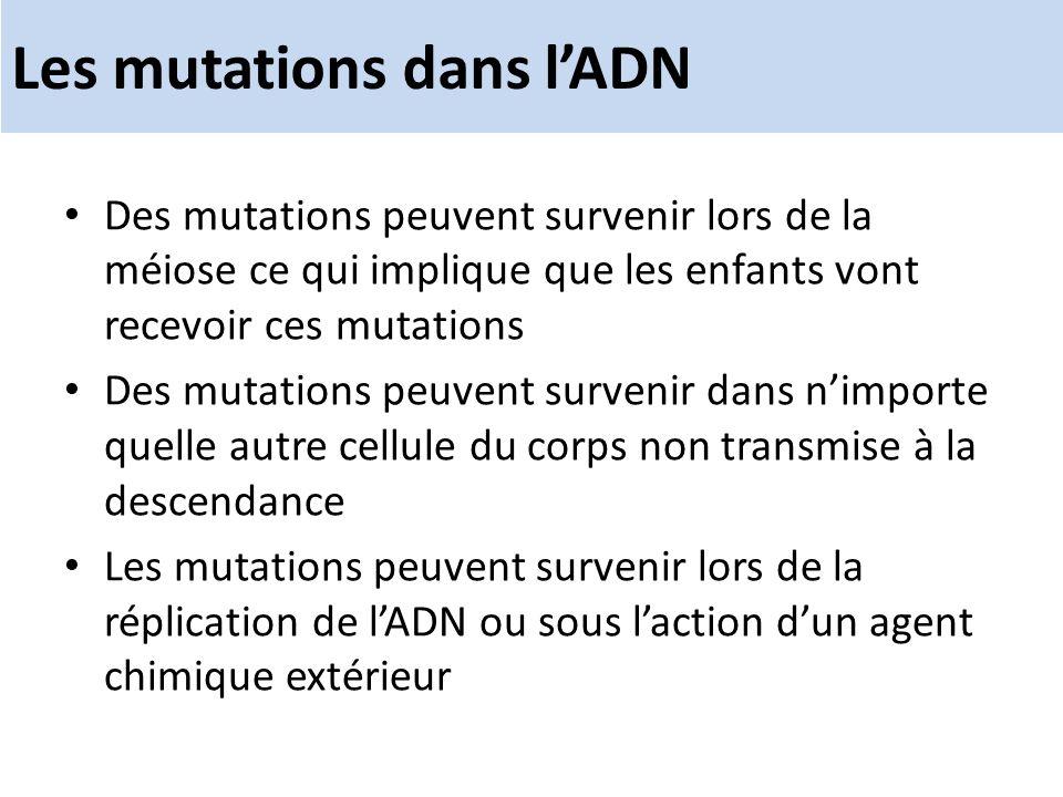 Les mutations dans lADN Des mutations peuvent survenir lors de la méiose ce qui implique que les enfants vont recevoir ces mutations Des mutations peu