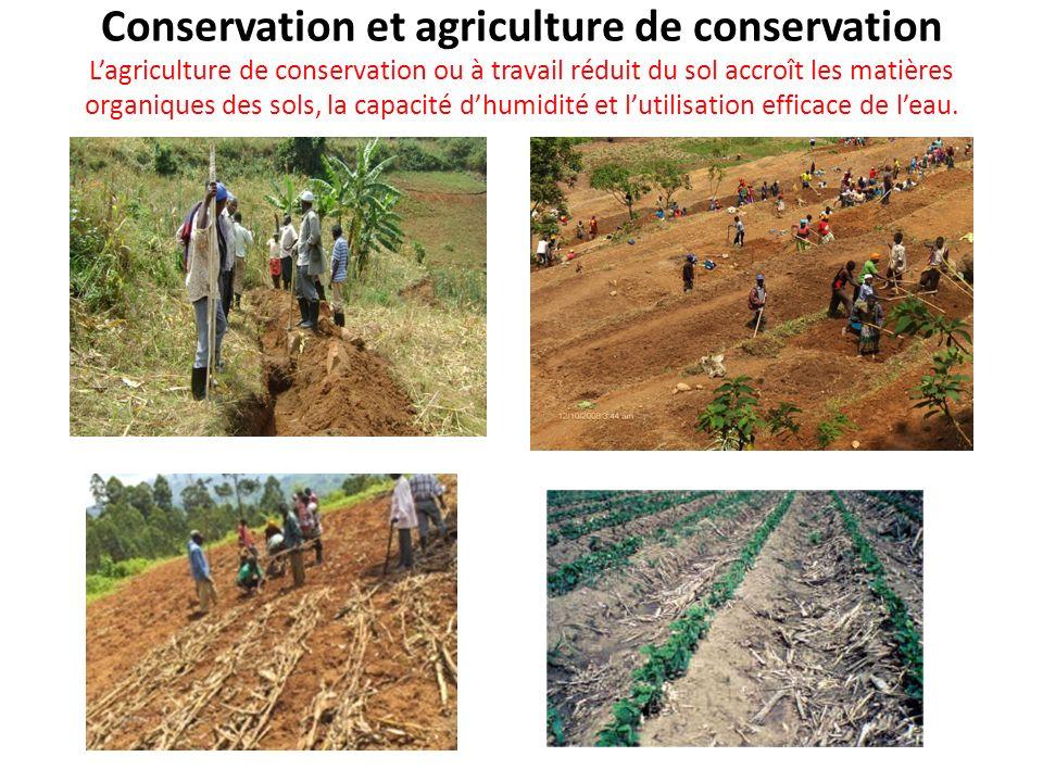 Conservation et agriculture de conservation Lagriculture de conservation ou à travail réduit du sol accroît les matières organiques des sols, la capac