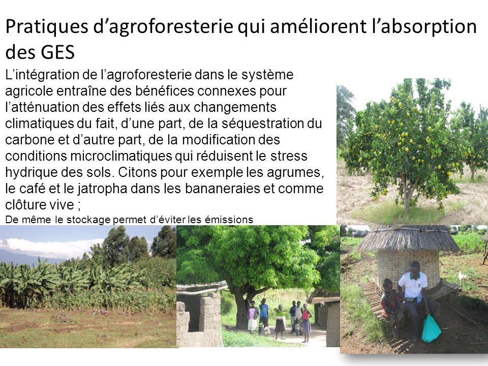 Lintégration de lagroforesterie dans le système agricole entraîne des bénéfices connexes pour latténuation des effets liés aux changements climatiques