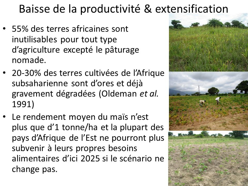 Baisse de la productivité & extensification 55% des terres africaines sont inutilisables pour tout type dagriculture excepté le pâturage nomade. 20-30