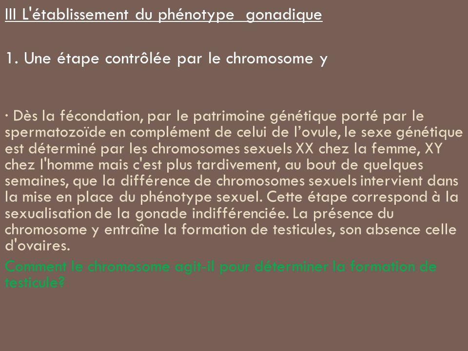 · Dès la fécondation, par le patrimoine génétique porté par le spermatozoïde en complément de celui de lovule, le sexe génétique est déterminé par les