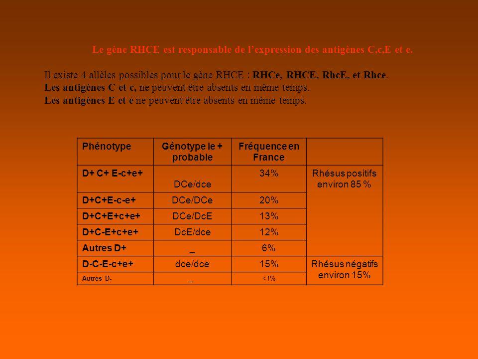 PhénotypeGénotype le + probable Fréquence en France D+ C+ E-c+e+ DCe/dce 34%Rhésus positifs environ 85 % D+C+E-c-e+DCe/DCe20% D+C+E+c+e+DCe/DcE13% D+C-E+c+e+DcE/dce12% Autres D+_6% D-C-E-c+e+dce/dce15%Rhésus négatifs environ 15% Autres D- _<1% Le gène RHCE est responsable de lexpression des antigènes C,c,E et e.