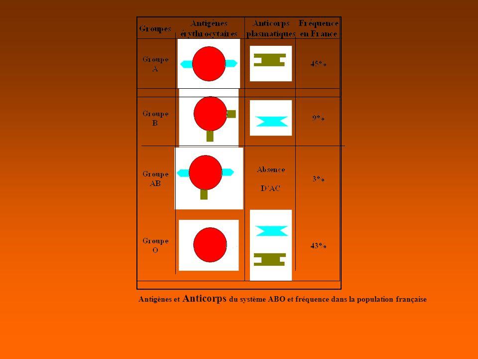 II.Règles transfusionnelles ABO : TRANSFUSION DE CGR: Concentres de Globules Rouges Un sujet A : peut recevoir des GR A (isogroupe) ou O (compatible) Un sujet B : peut recevoir des GR B (isogroupe) ou O (compatible) Un sujet O : ne peut recevoir que des GR O Un sujet AB : peut recevoir des GR A, (compatible), des GR B (compatible), des GR AB (isogroupe) ou O (compatible).