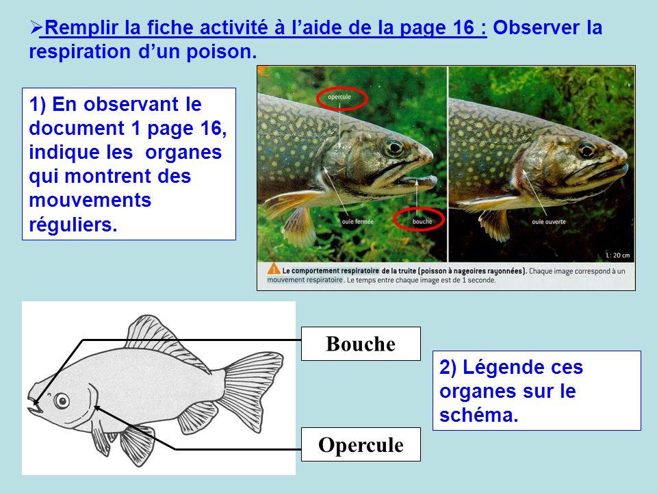 Remplir la fiche activité à laide de la page 16 : Observer la respiration dun poison. 1) En observant le document 1 page 16, indique les organes qui m