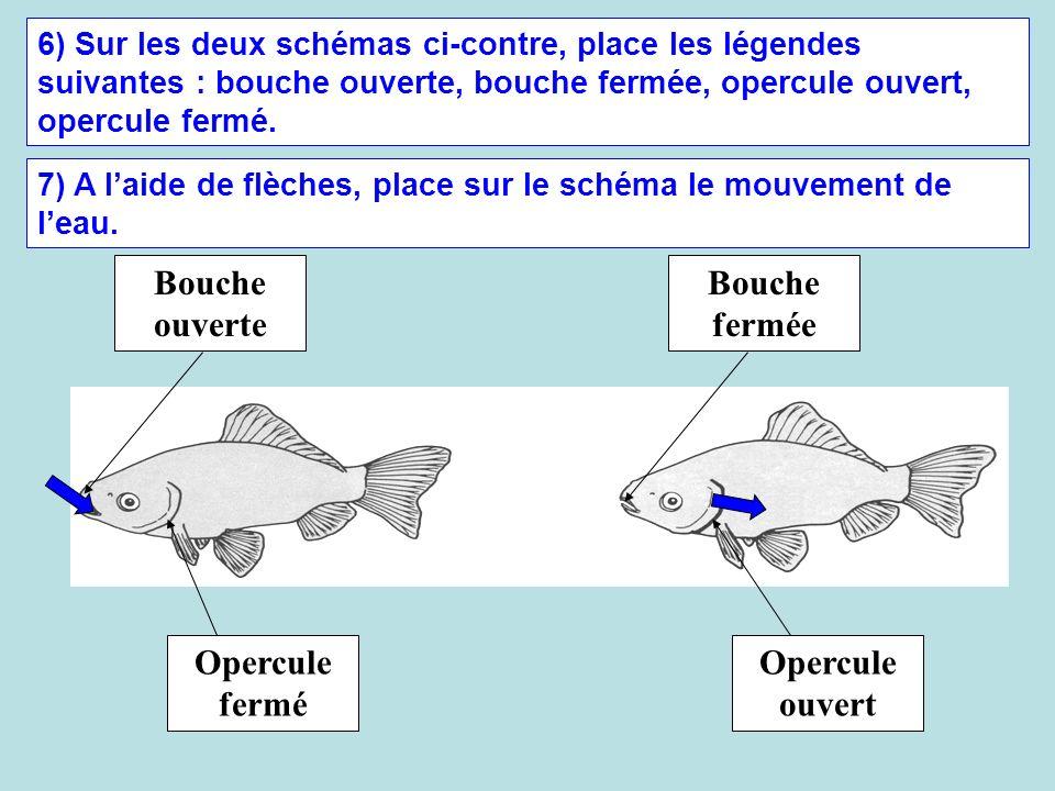 6) Sur les deux schémas ci-contre, place les légendes suivantes : bouche ouverte, bouche fermée, opercule ouvert, opercule fermé. Bouche ouverte Bouch