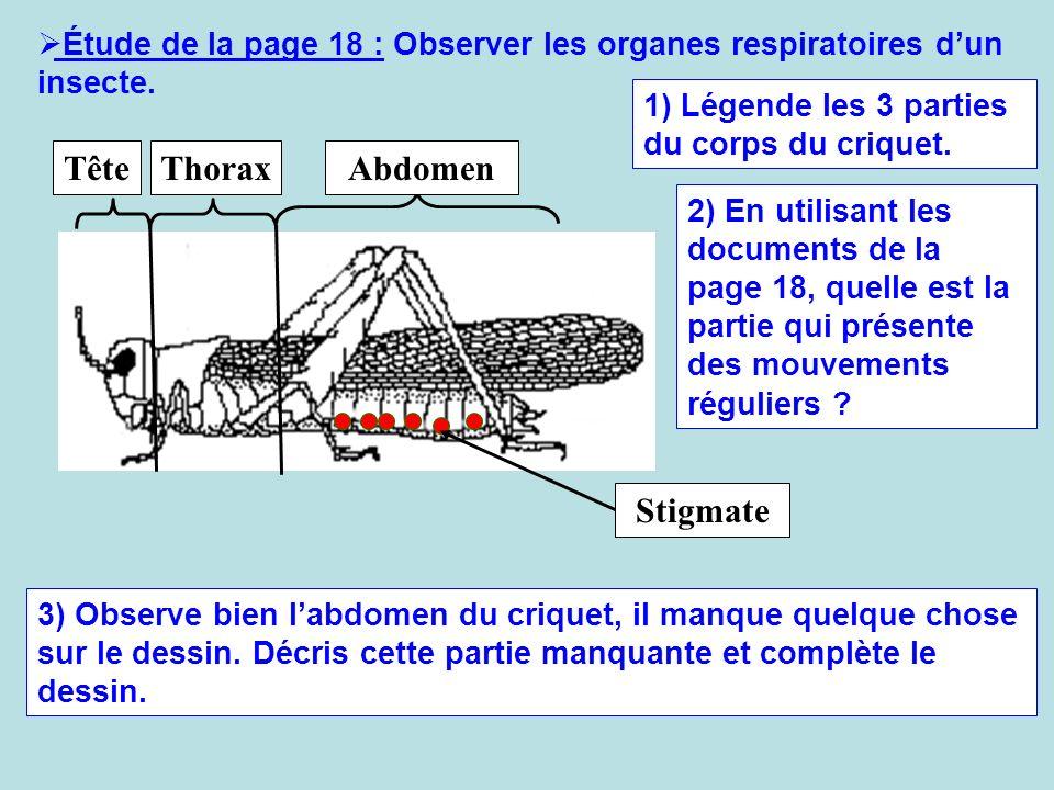 Étude de la page 18 : Observer les organes respiratoires dun insecte. TêteThoraxAbdomen 1) Légende les 3 parties du corps du criquet. 2) En utilisant