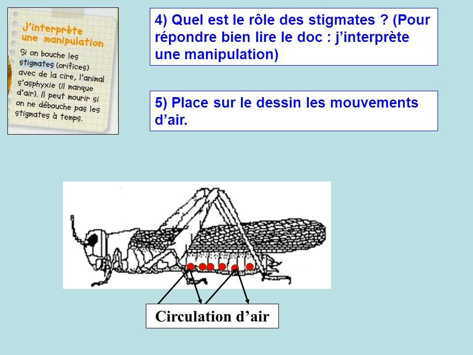 4) Quel est le rôle des stigmates ? (Pour répondre bien lire le doc : jinterprète une manipulation) 5) Place sur le dessin les mouvements dair. Circul