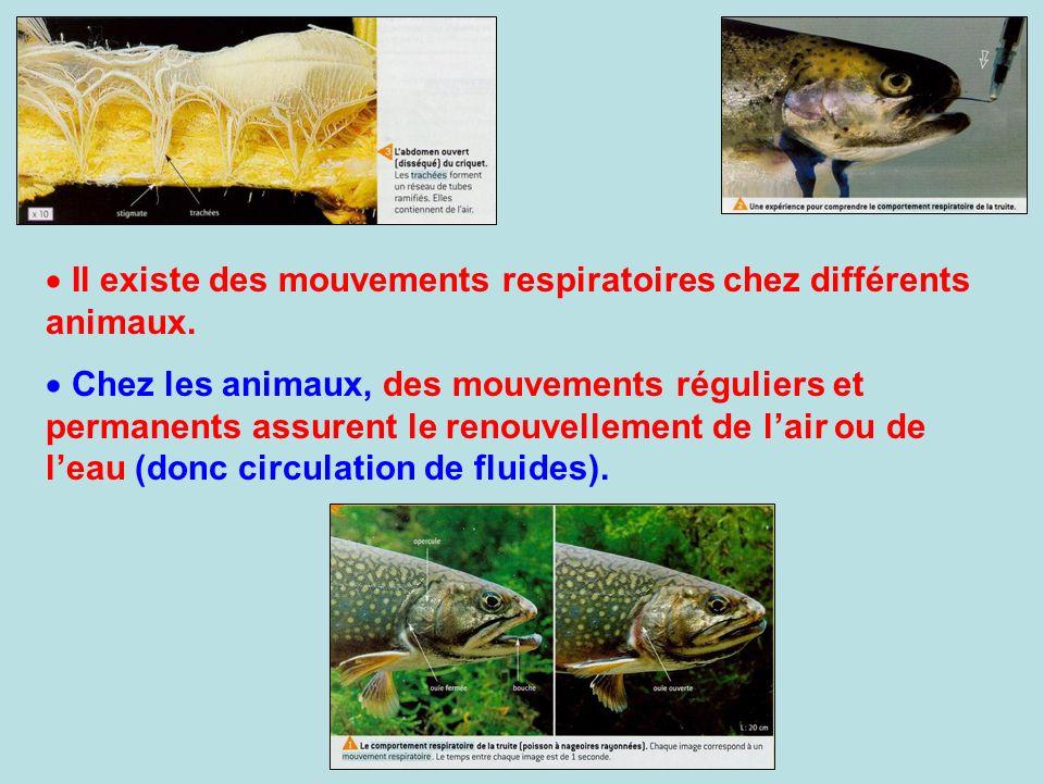 Il existe des mouvements respiratoires chez différents animaux. Chez les animaux, des mouvements réguliers et permanents assurent le renouvellement de