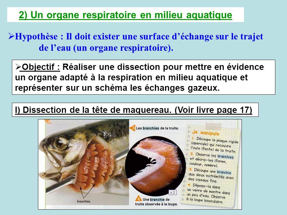 2) Un organe respiratoire en milieu aquatique Hypothèse : Il doit exister une surface déchange sur le trajet de leau (un organe respiratoire). Objecti