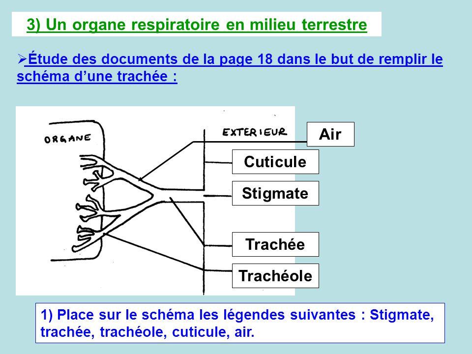 3) Un organe respiratoire en milieu terrestre Étude des documents de la page 18 dans le but de remplir le schéma dune trachée : 1) Place sur le schéma