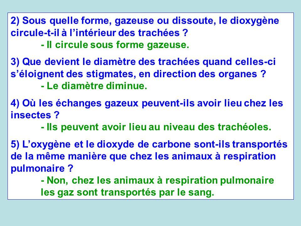 2) Sous quelle forme, gazeuse ou dissoute, le dioxygène circule-t-il à lintérieur des trachées ? - Il circule sous forme gazeuse. 3) Que devient le di