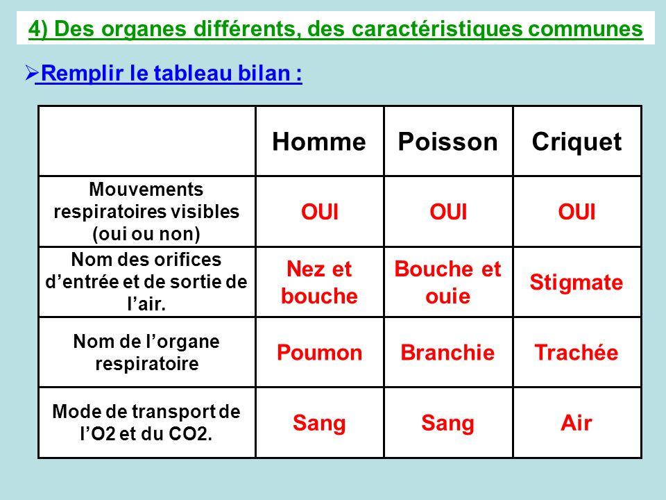 4) Des organes différents, des caractéristiques communes Remplir le tableau bilan : AirSang Mode de transport de lO2 et du CO2. TrachéeBranchiePoumon