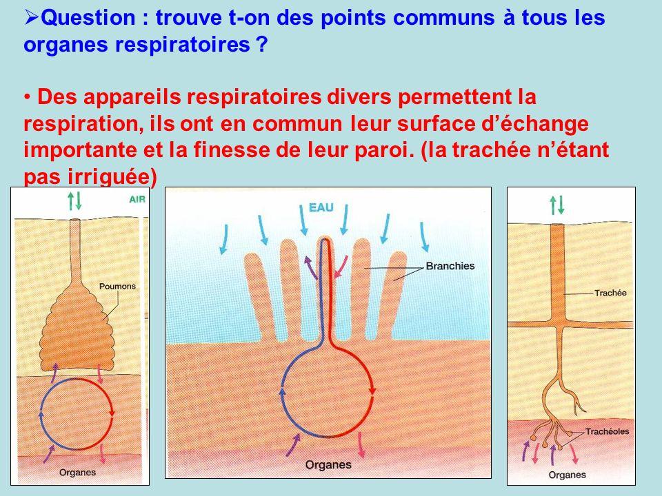 Question : trouve t-on des points communs à tous les organes respiratoires ? Des appareils respiratoires divers permettent la respiration, ils ont en