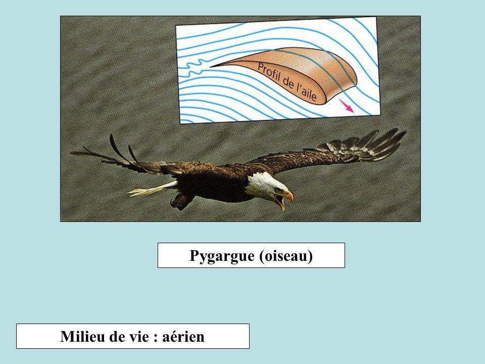 Pygargue (oiseau) Milieu de vie : aérien