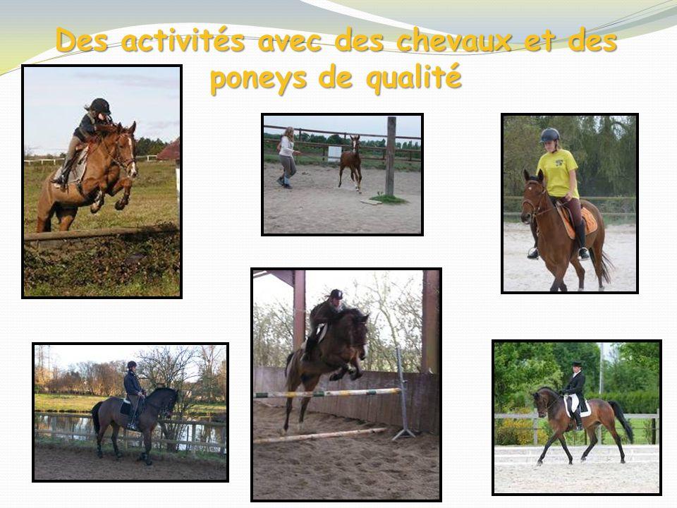 Des activités avec des chevaux et des poneys de qualité