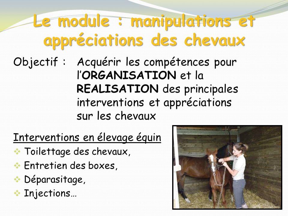Le module : manipulations et appréciations des chevaux Objectif : Interventions en élevage équin Toilettage des chevaux, Entretien des boxes, Déparasi