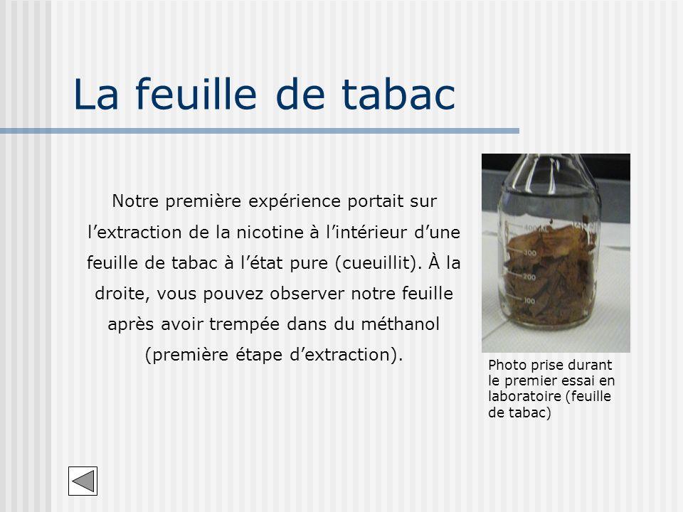 La feuille de tabac Photo prise durant le premier essai en laboratoire (feuille de tabac) Notre première expérience portait sur lextraction de la nico