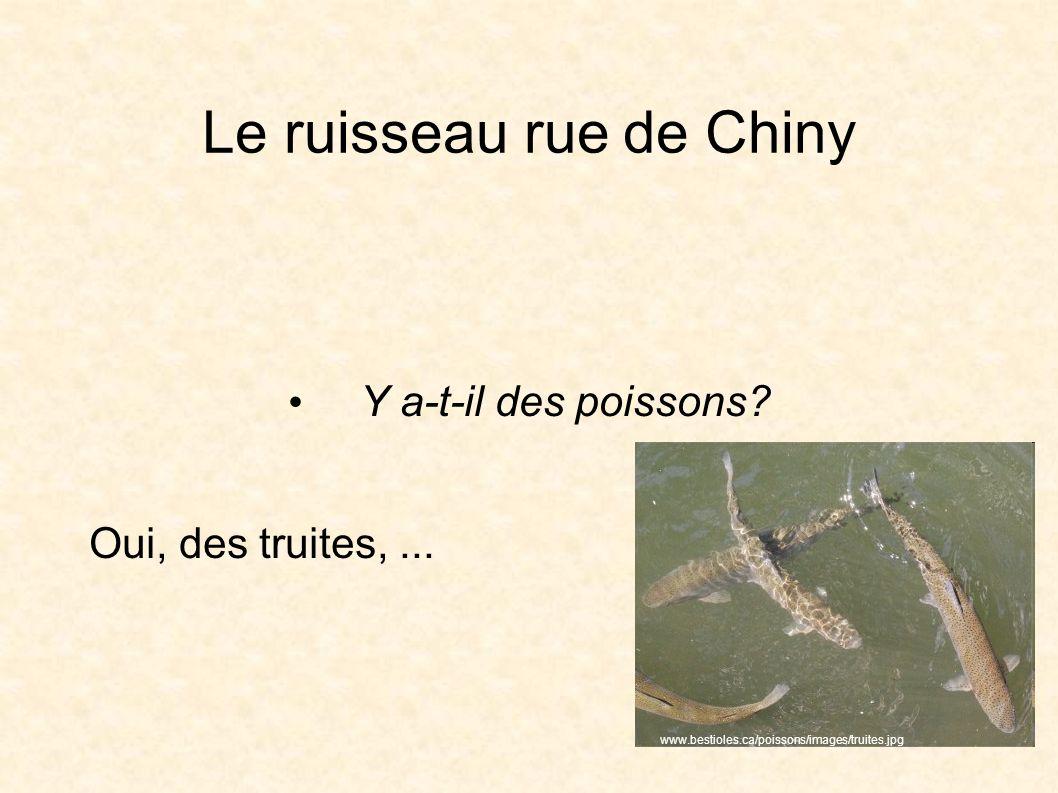 Le ruisseau rue de Chiny Y a-t-il des poissons. Oui, des truites,...