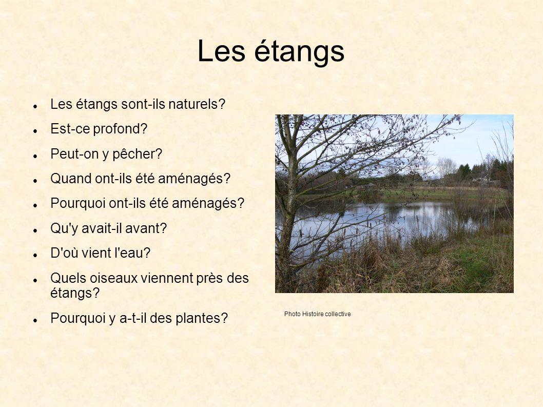 Les étangs Les étangs sont-ils naturels. Est-ce profond.