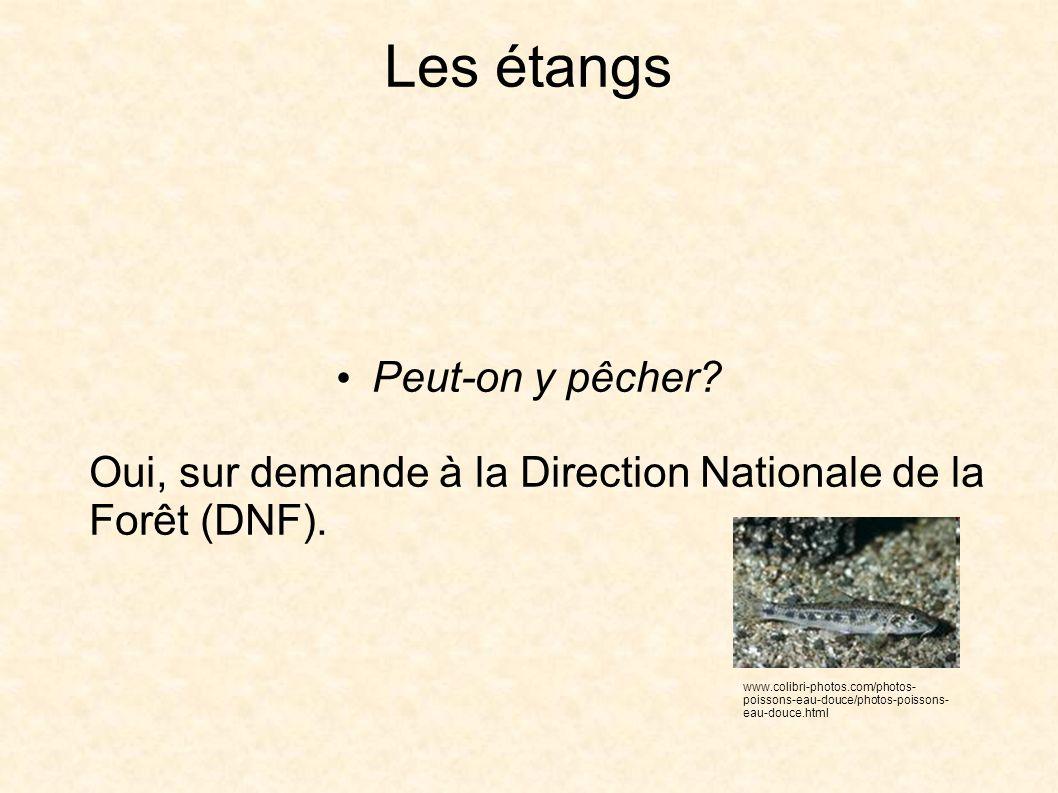 Les étangs Peut-on y pêcher. Oui, sur demande à la Direction Nationale de la Forêt (DNF).