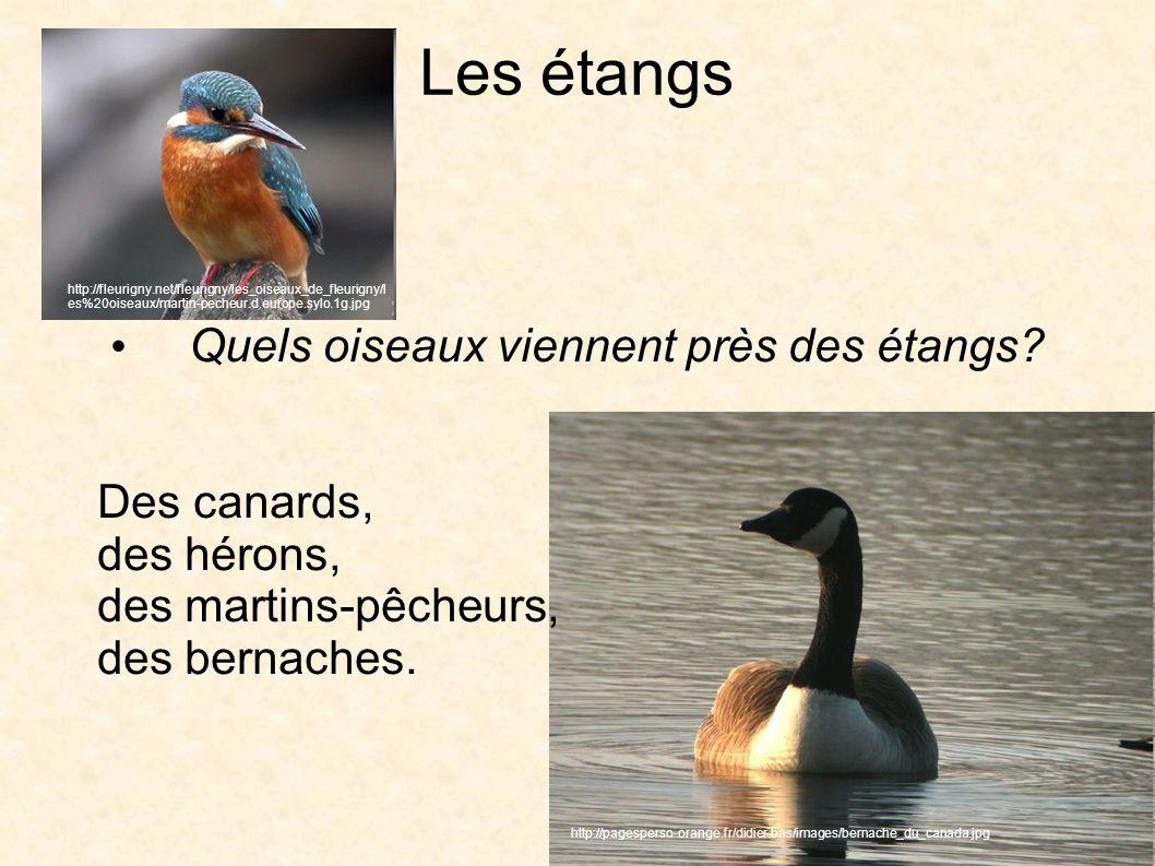 Les étangs Quels oiseaux viennent près des étangs.