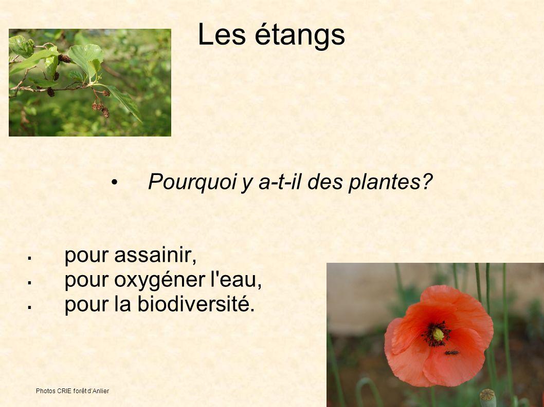 Les étangs Pourquoi y a-t-il des plantes. pour assainir, pour oxygéner l eau, pour la biodiversité.