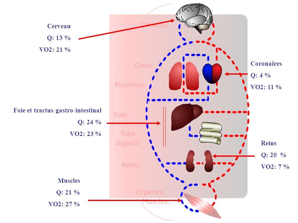 Cerveau Q: 13 % VO2: 21 % Coronaires Q: 4 % VO2: 11 % Foie et tractus gastro-intestinal Q: 24 % VO2: 23 % Reins Q: 20 % VO2: 7 % Muscles Q: 21 % VO2: 27 %