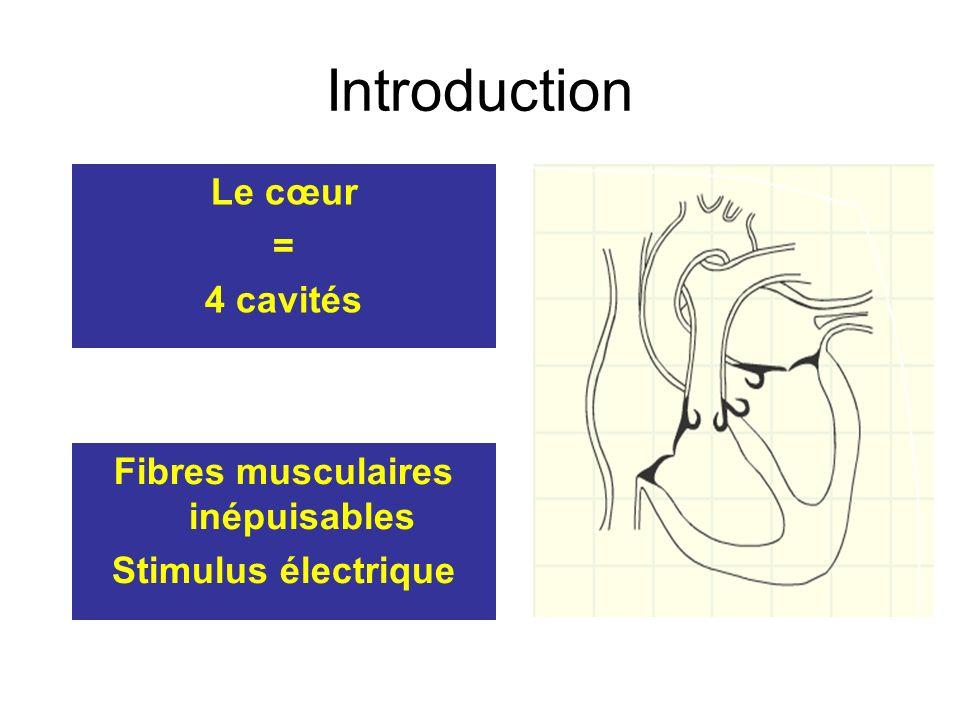 Introduction Fibres musculaires inépuisables Stimulus électrique Le cœur = 4 cavités