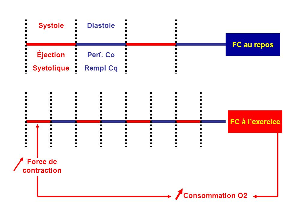 FC à lexercice Force de contraction Consommation O2 Systole FC au repos Diastole Éjection Systolique Perf. Co Rempl Cq
