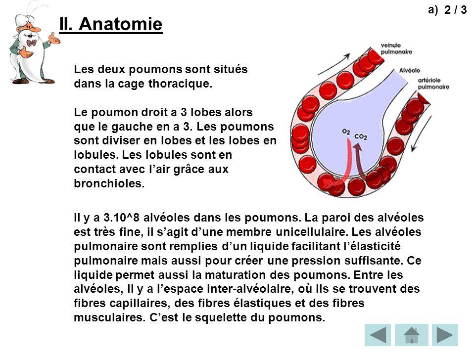 II. Anatomie 2 / 3 Les deux poumons sont situés dans la cage thoracique. Le poumon droit a 3 lobes alors que le gauche en a 3. Les poumons sont divise