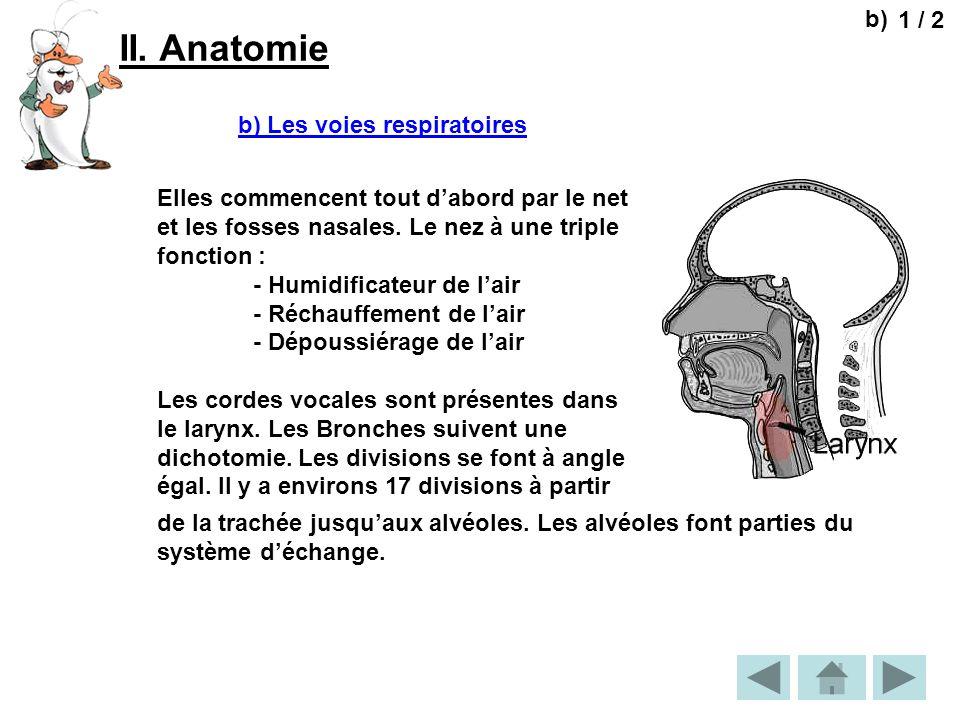 II. Anatomie 1 / 2 b) b) Les voies respiratoires Elles commencent tout dabord par le net et les fosses nasales. Le nez à une triple fonction : - Humid