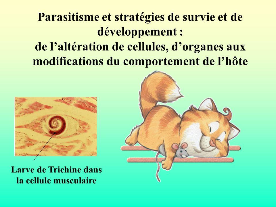 Détournement du fonctionnement cellulaire normal Cas de la trichinose Adulte larve