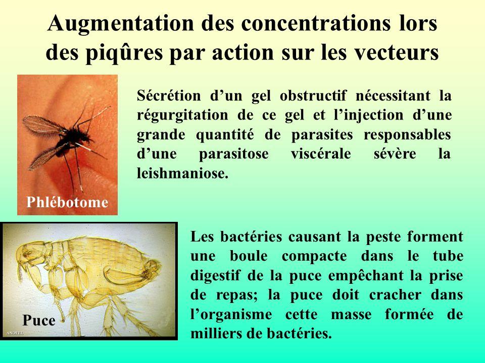 Augmentation des concentrations lors des piqûres par action sur les vecteurs Sécrétion dun gel obstructif nécessitant la régurgitation de ce gel et li