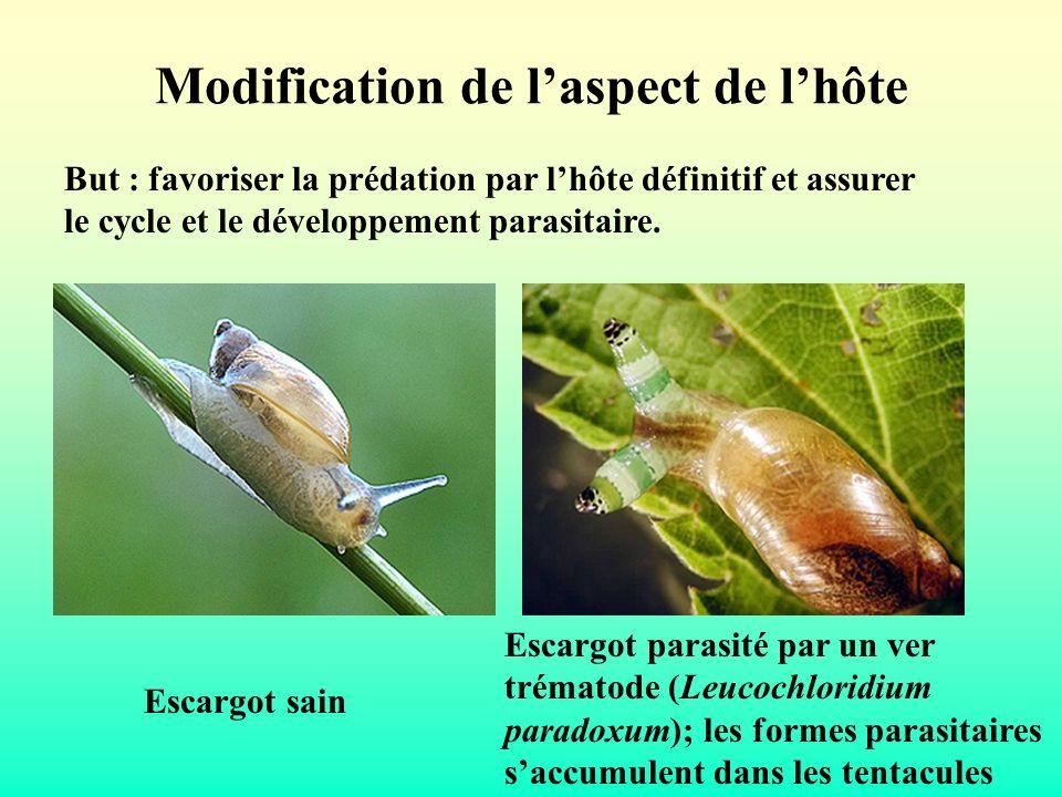 Modification de laspect de lhôte But : favoriser la prédation par lhôte définitif et assurer le cycle et le développement parasitaire. Escargot sain E
