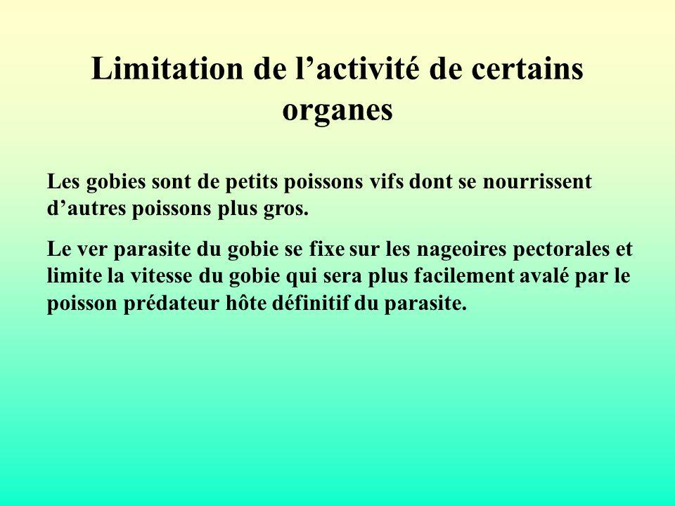 Limitation de lactivité de certains organes Les gobies sont de petits poissons vifs dont se nourrissent dautres poissons plus gros. Le ver parasite du