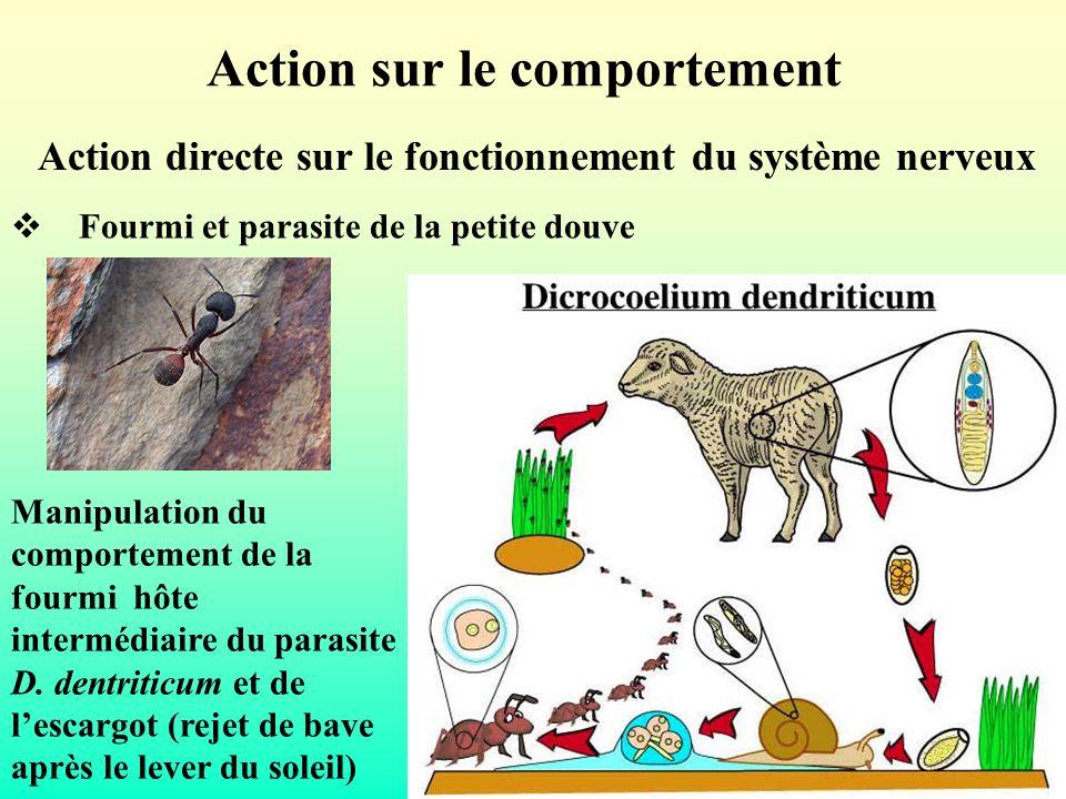 Action sur le comportement Action directe sur le fonctionnement du système nerveux Fourmi et parasite de la petite douve Manipulation du comportement