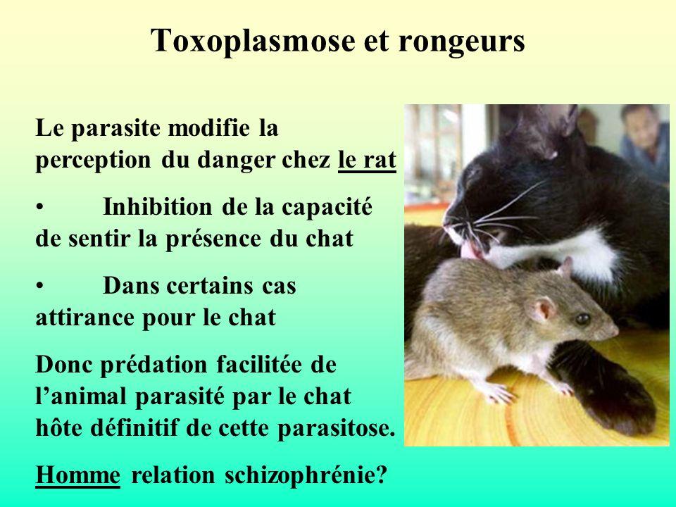 Toxoplasmose et rongeurs Le parasite modifie la perception du danger chez le rat Inhibition de la capacité de sentir la présence du chat Dans certains