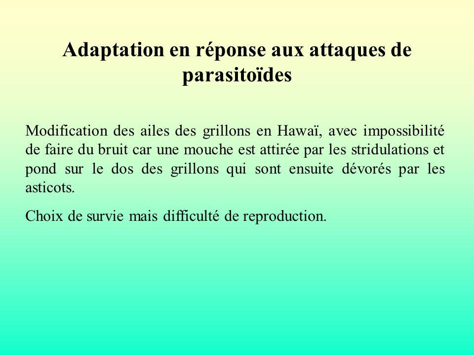 Adaptation en réponse aux attaques de parasitoïdes Modification des ailes des grillons en Hawaï, avec impossibilité de faire du bruit car une mouche e