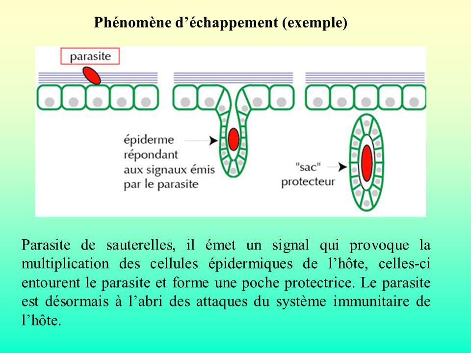 Parasite de sauterelles, il émet un signal qui provoque la multiplication des cellules épidermiques de lhôte, celles-ci entourent le parasite et forme