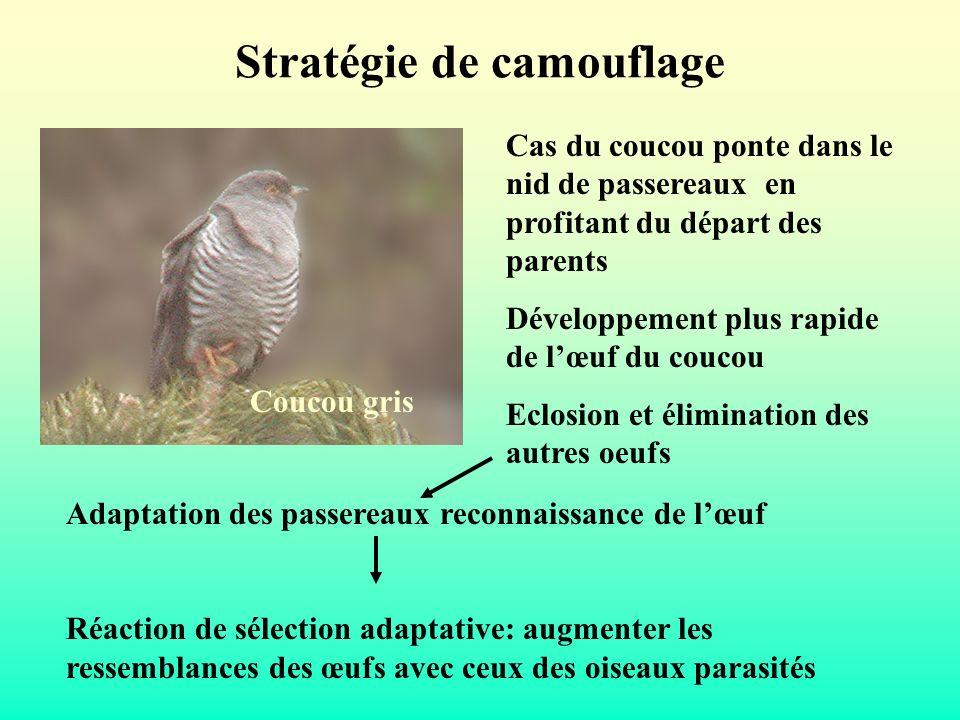 Stratégie de camouflage Cas du coucou ponte dans le nid de passereaux en profitant du départ des parents Développement plus rapide de lœuf du coucou E