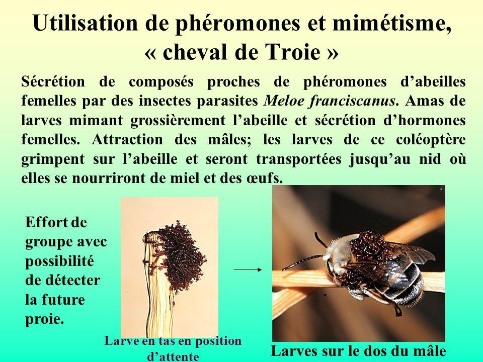 Utilisation de phéromones et mimétisme, « cheval de Troie » Sécrétion de composés proches de phéromones dabeilles femelles par des insectes parasites