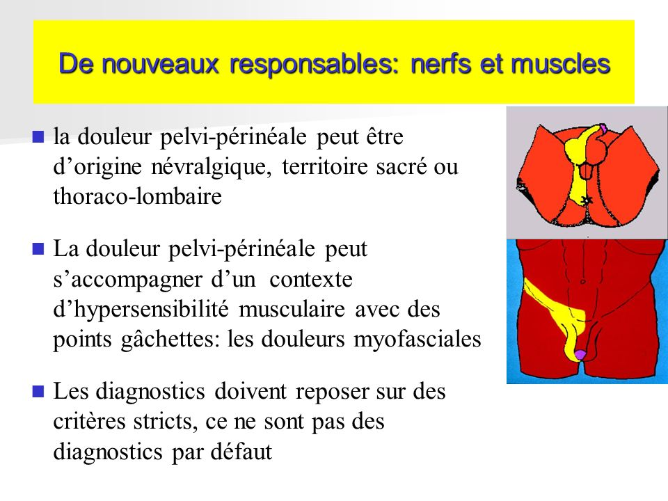 De nouveaux responsables: nerfs et muscles la douleur pelvi-périnéale peut être dorigine névralgique, territoire sacré ou thoraco-lombaire La douleur