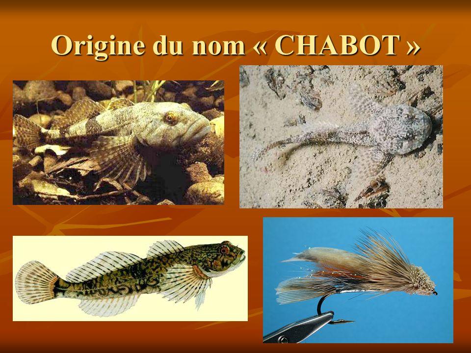 Devise des Chabot DEVISE: ALLER AU FOND DES CHOSES DEVISE: ALLER AU FOND DES CHOSES Nicole Chabot, première trésorière de lAssociation des Chabot, a proposé cette devise.