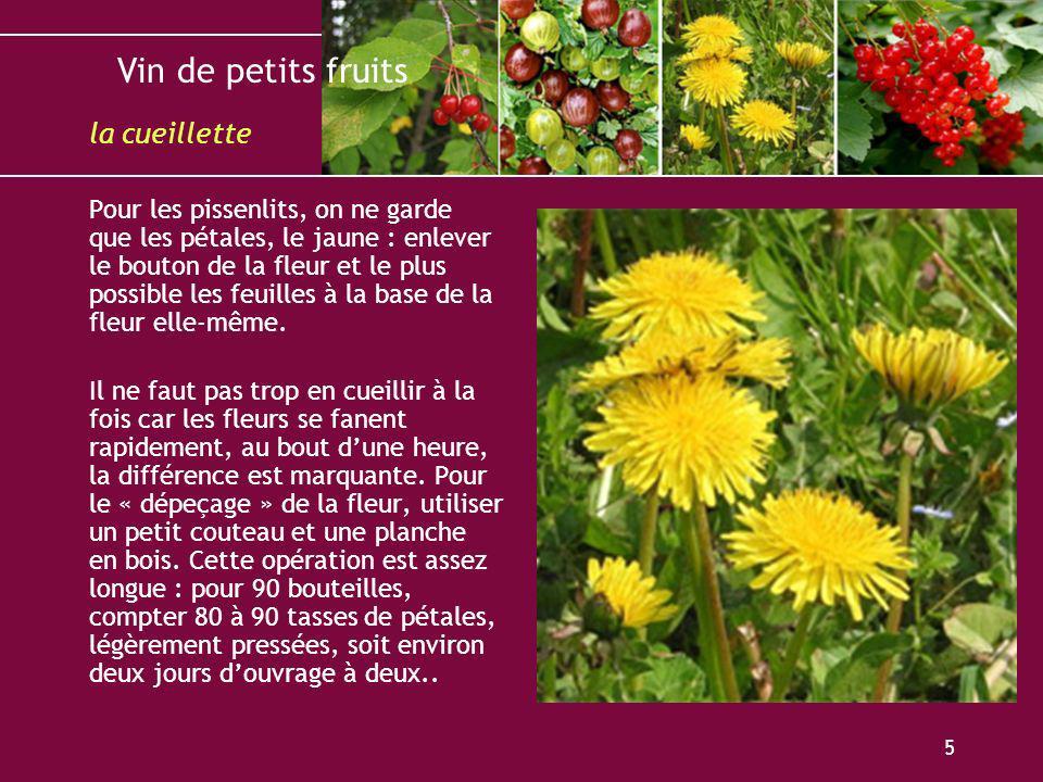 Vin de petits fruits 5 Pour les pissenlits, on ne garde que les pétales, le jaune : enlever le bouton de la fleur et le plus possible les feuilles à l